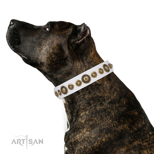 Rust resistant buckle and D-ring on full grain leather dog collar for walking
