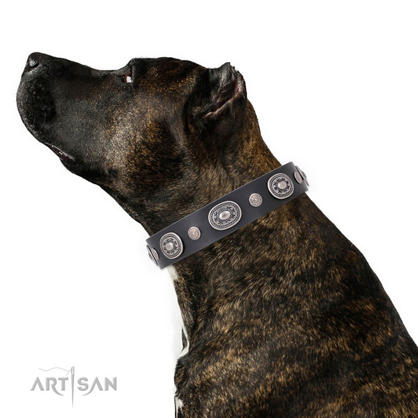 Corrosion proof buckle and D-ring on full grain leather dog collar for walking