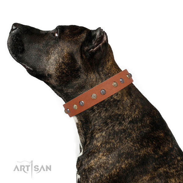 Leather dog collar with rust resistant buckle and D-ring for everyday walking