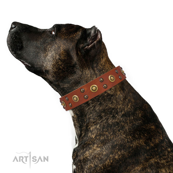 Daily use dog collar with designer decorations