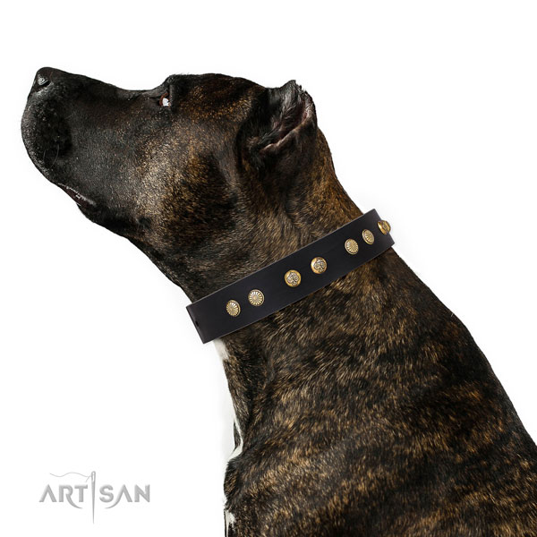 Fashionable studs on easy wearing genuine leather dog collar