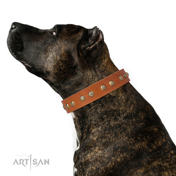 Unusual embellishments on everyday walking leather dog collar