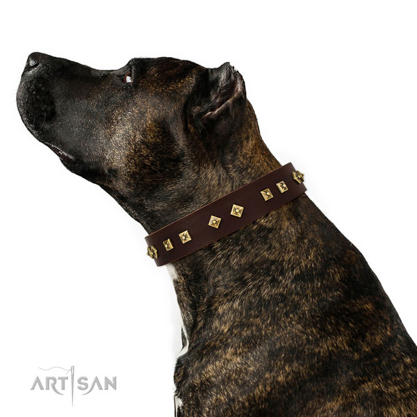 Stylish adornments on comfy wearing genuine leather dog collar