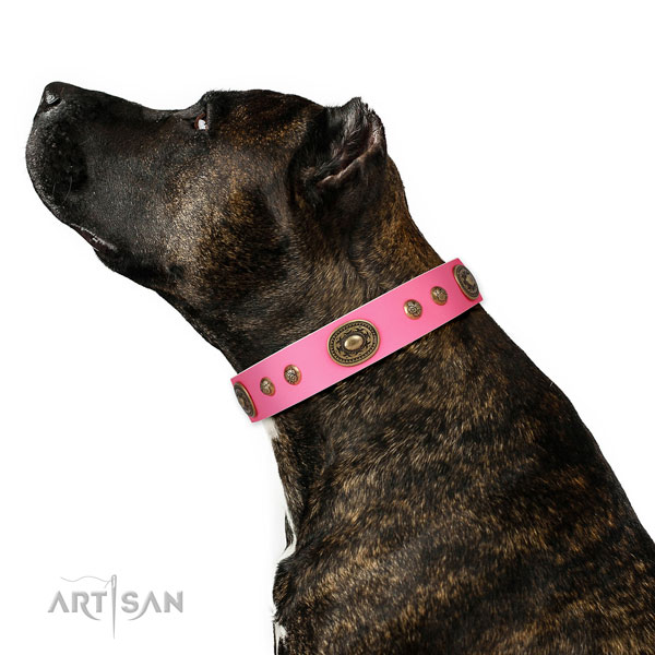 Stylish decorations on comfy wearing dog collar