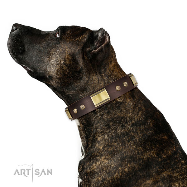 Daily walking dog collar of natural leather with unusual embellishments