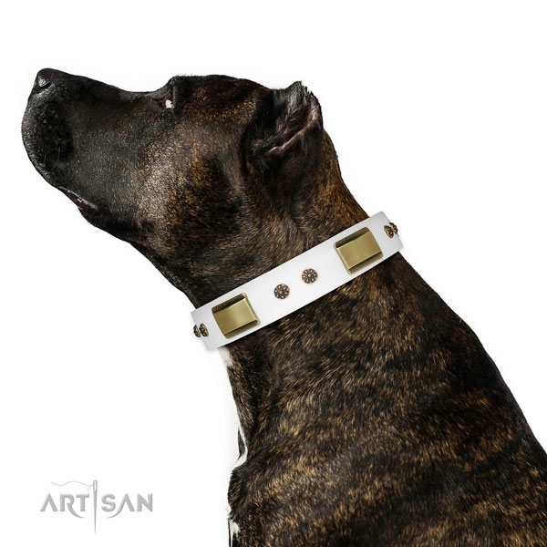 Everyday use dog collar of leather with unique adornments