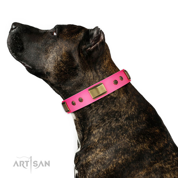 Easy wearing dog collar of leather with designer studs