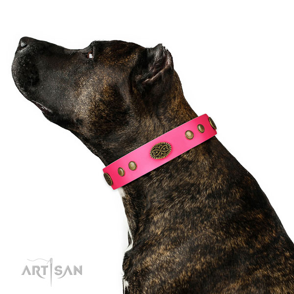Reliable buckle on genuine leather dog collar for everyday use