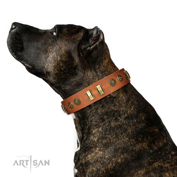 Corrosion resistant fittings on natural leather dog collar for comfortable wearing