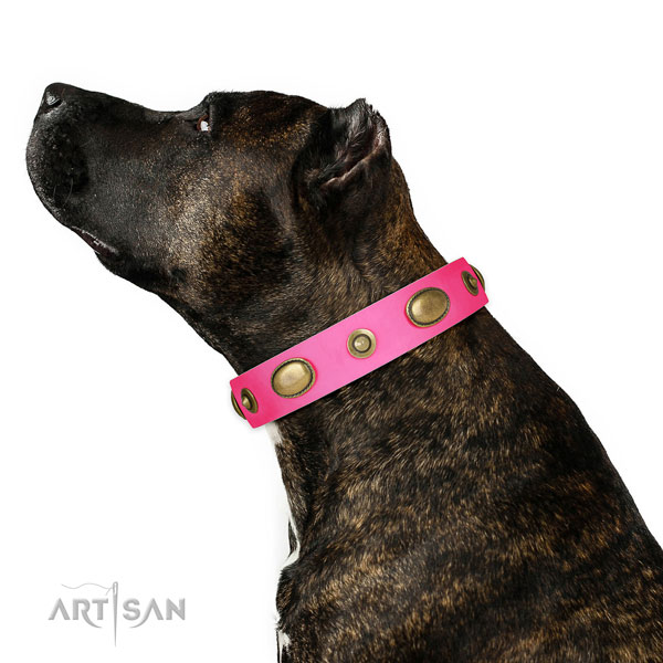Stylish walking dog collar of genuine leather with unusual studs