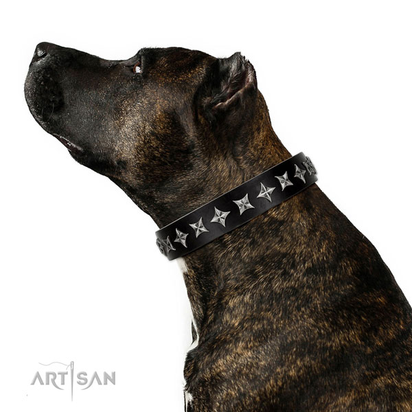 Everyday walking decorated dog collar of fine quality leather