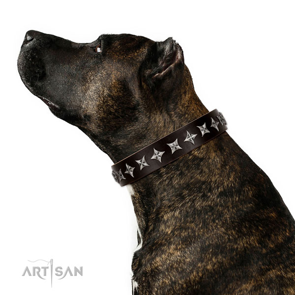 Everyday walking embellished dog collar of strong natural leather