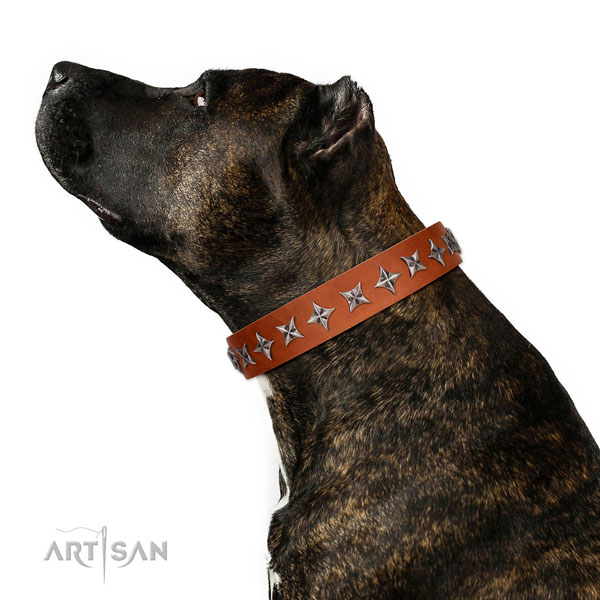 Top quality genuine leather dog collar with incredible embellishments