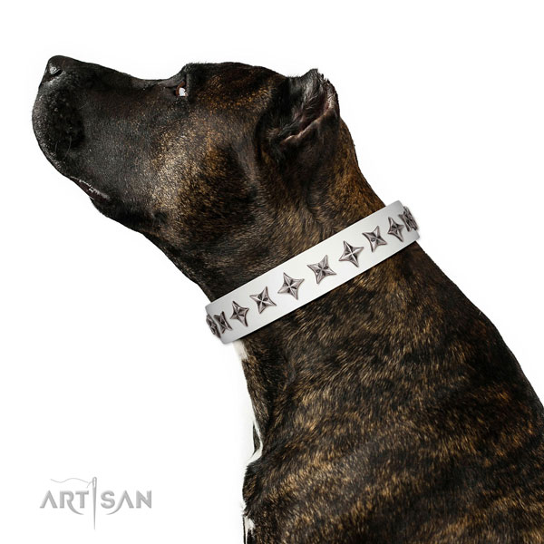 Finest quality full grain natural leather dog collar with top notch adornments