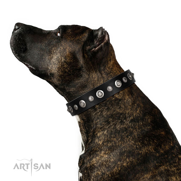 Fine quality full grain leather dog collar with exquisite decorations