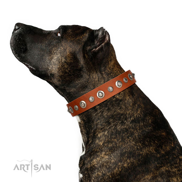 Natural leather collar with rust resistant fittings for your lovely canine