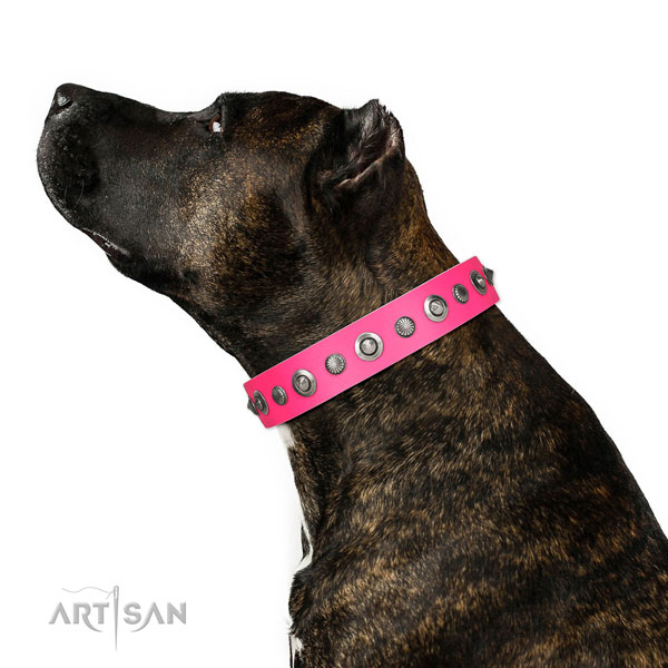 Full grain natural leather collar with rust resistant traditional buckle for your beautiful doggie