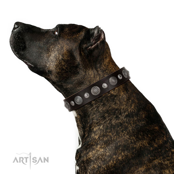 Remarkable natural leather dog collar with rust resistant D-ring