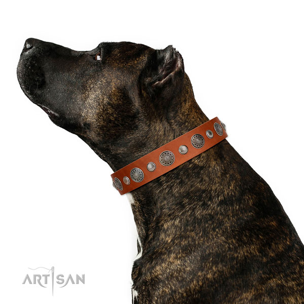 Handcrafted Full grain natural leather dog collar with rust-proof hardware
