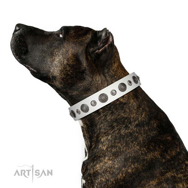 Adorned leather dog collar with corrosion proof hardware