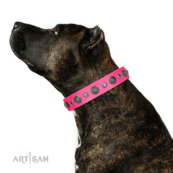 Fashionable natural leather dog collar with rust resistant D-ring