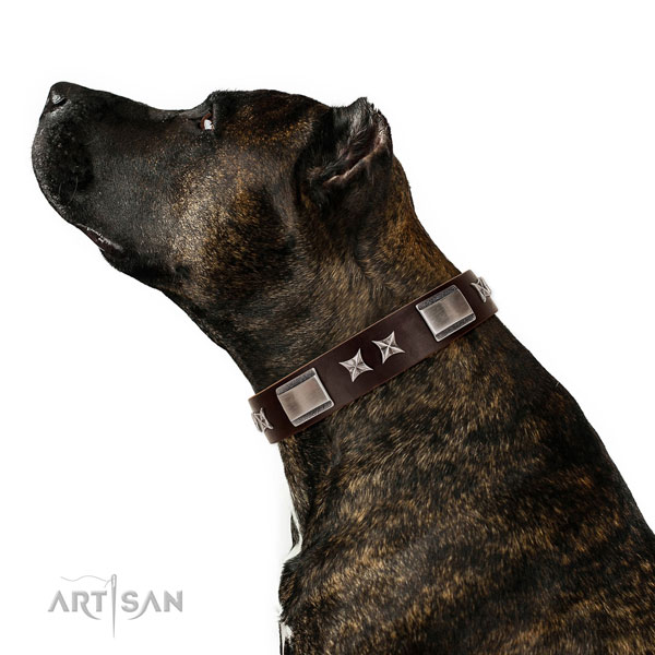 Exceptional collar of natural leather for your impressive dog