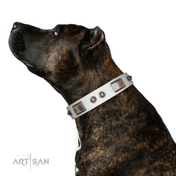 Unique leather dog collar with embellishments