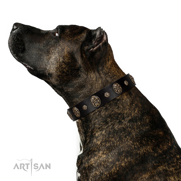 Everyday use dog collar of natural leather with stylish adornments