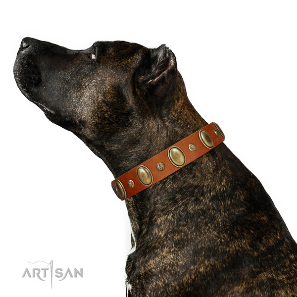 Decorated leather dog collar with corrosion proof hardware