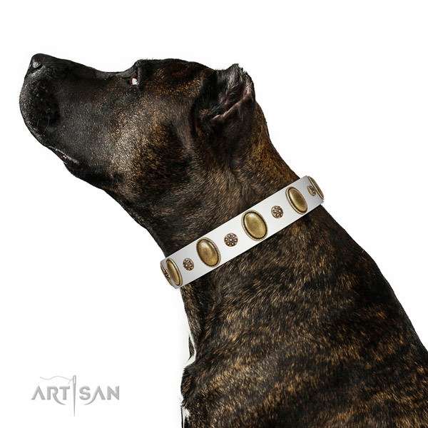 Comfortable wearing top rate leather dog collar with adornments