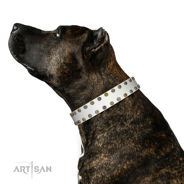 Trendy natural leather dog collar with reliable embellishments