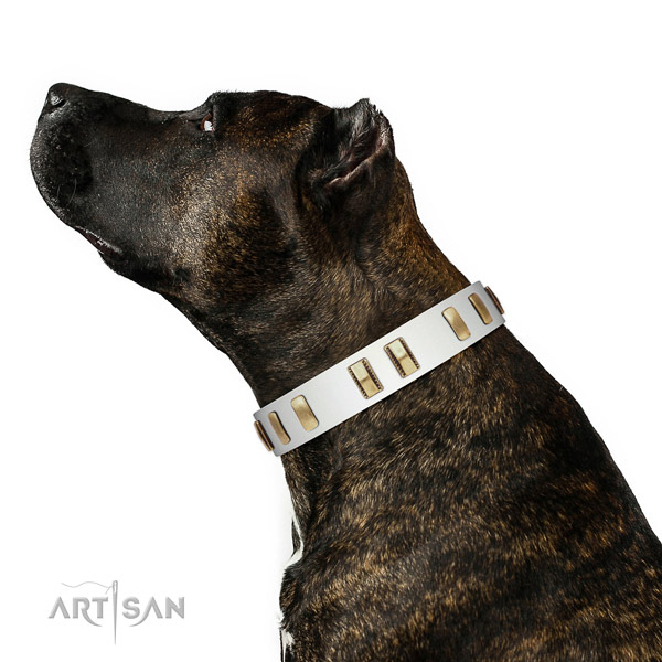 Leather dog collar with trendy adornments for daily use