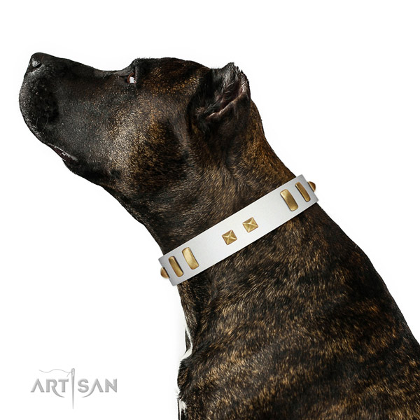 Impressive studded leather dog collar of flexible material