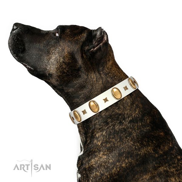 Amazing decorated natural leather dog collar of top rate material