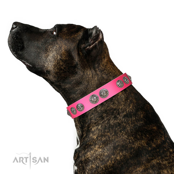 Full grain leather dog collar of top rate material with designer adornments