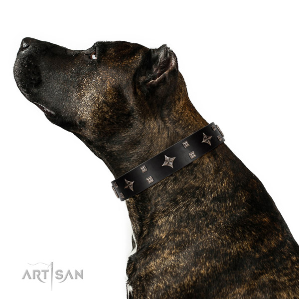Leather dog collar of flexible material with unusual decorations