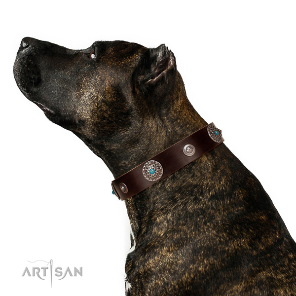 Leather dog collar with non-rusting hardware for reliable canine handling