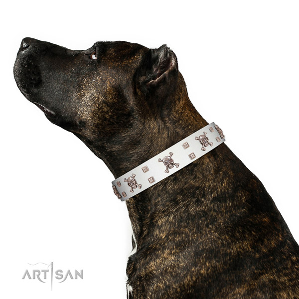Leather dog collar with riveted elements for safe canine managing