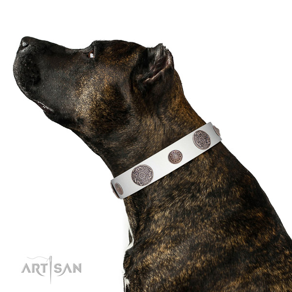 Strong decorations on leather dog collar