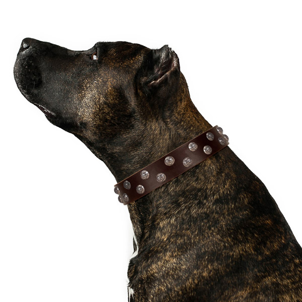 Unique full grain genuine leather dog collar with durable fittings