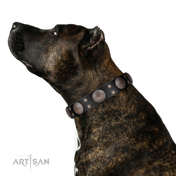 Comfy wearing top notch leather dog collar with embellishments