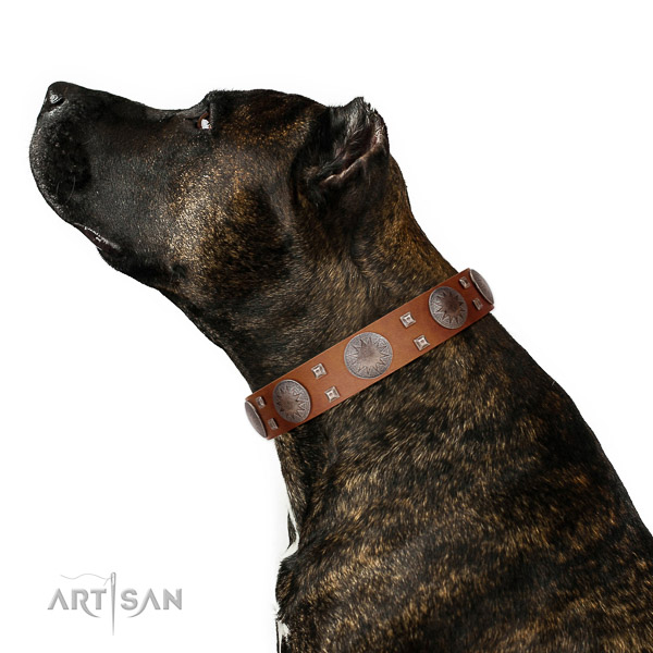 Easy adjustable collar of natural leather for your handsome canine
