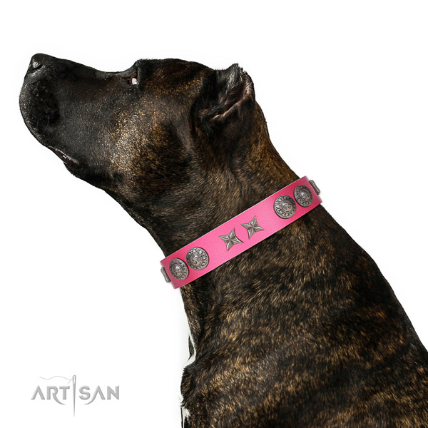 Leather dog collar of flexible material with extraordinary studs