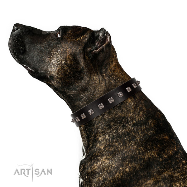 Stylish design decorated full grain natural leather dog collar