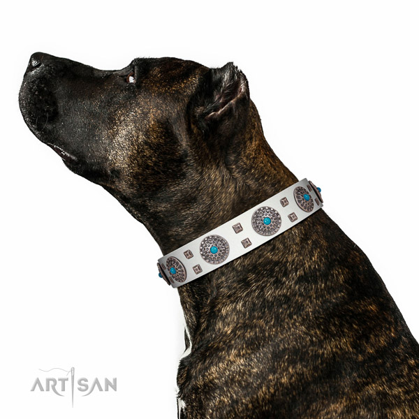 Fancy walking full grain natural leather dog collar with remarkable adornments