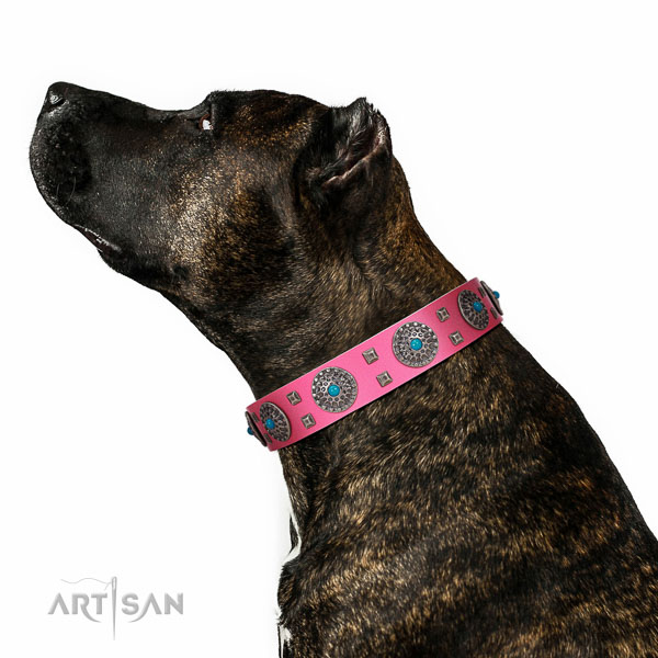 Comfortable wearing full grain genuine leather dog collar with designer embellishments