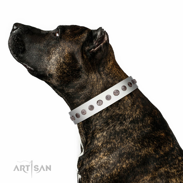 Rust resistant traditional buckle on genuine leather dog collar for everyday walking your dog