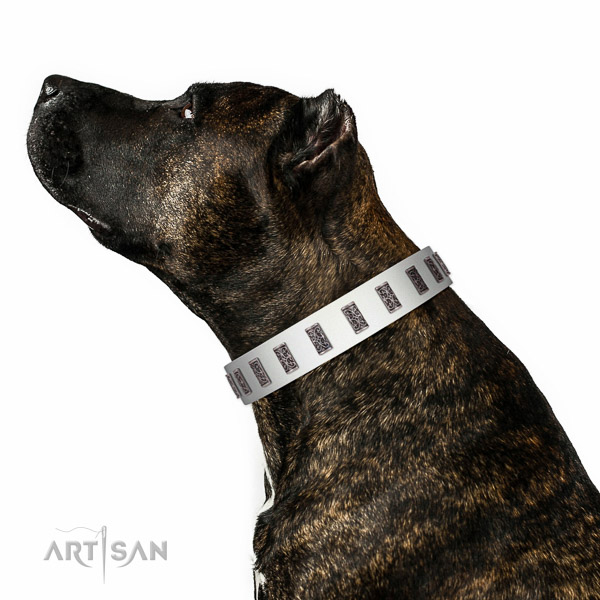 Rust resistant fittings on genuine leather dog collar for daily walking your doggie