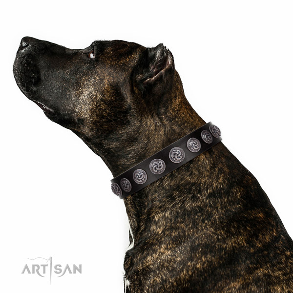 Handy use quality full grain leather dog collar with embellishments