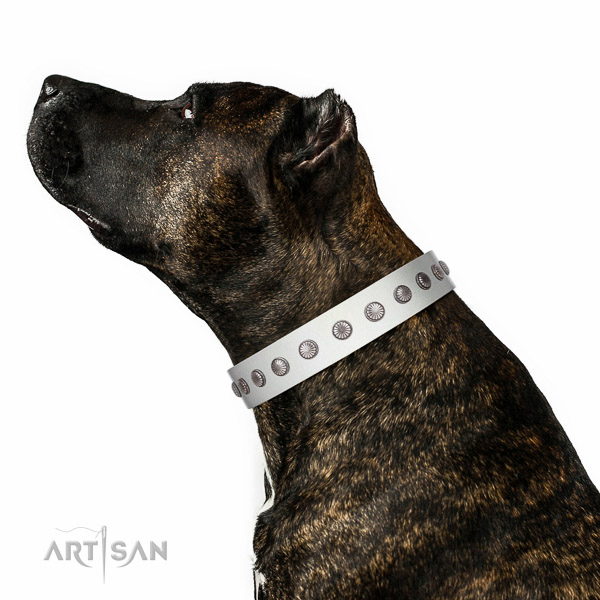 Top notch genuine leather dog collar with decorations for walking